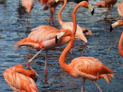 富力紅樹灣濕地公園