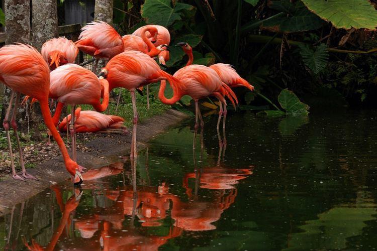 Flamingo Gardens2