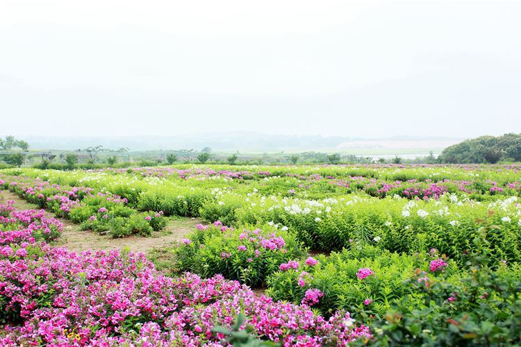 Huaxianzi Scenic Area4