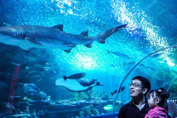 吉隆坡城中城水族館3