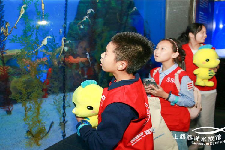 Shanghai Ocean Aquarium4