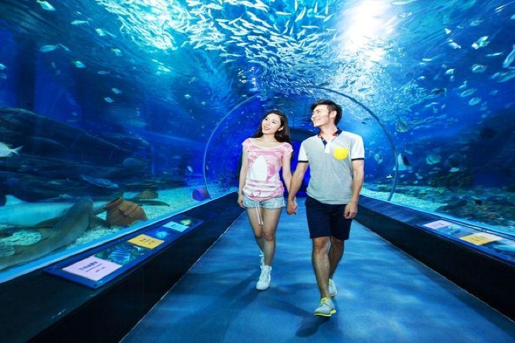 成都海昌極地海洋公園2