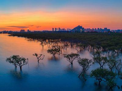 北海金海灣紅樹林生態旅遊區