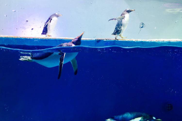 정자(정가) 극지해양세계(지디하이양스제)1