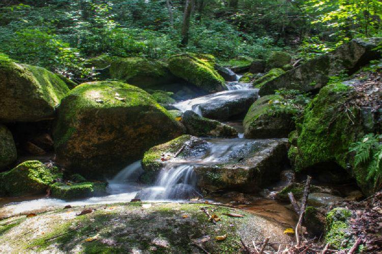 바이차오와 국립삼림공원2