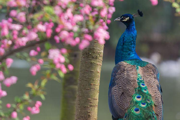 Wuhan Zoo