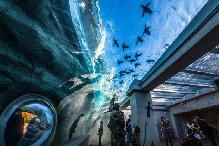 九十九島水族館2
