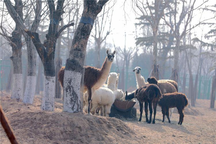 Linyi Zoo and Botanical Garden4