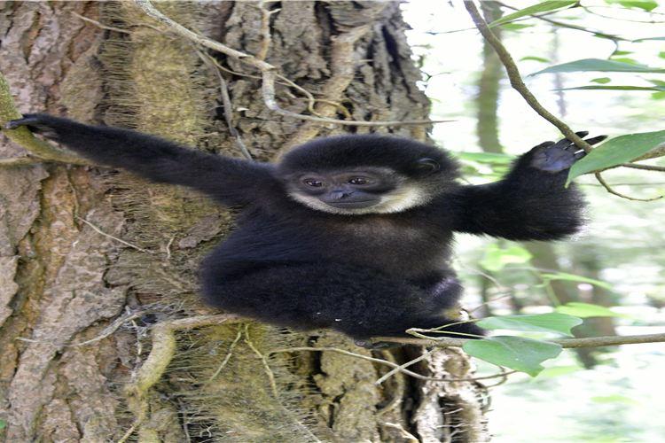 구이저우 삼림 야생동물원4
