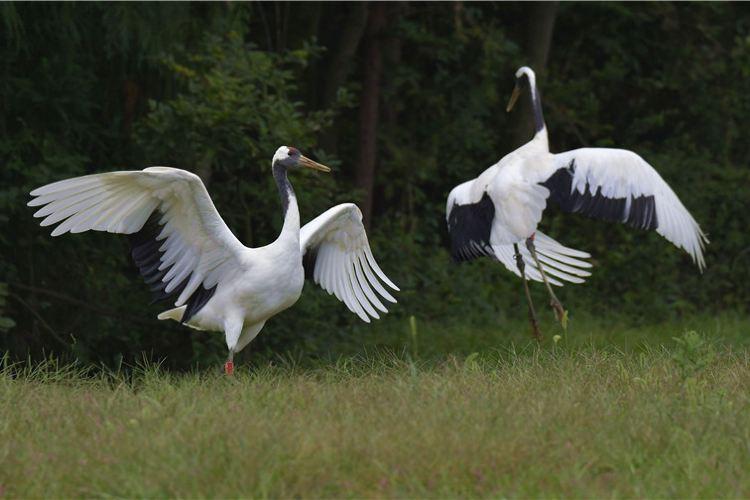 구이저우 삼림 야생동물원3
