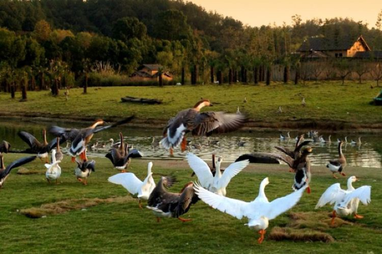 Ecology Zoo4