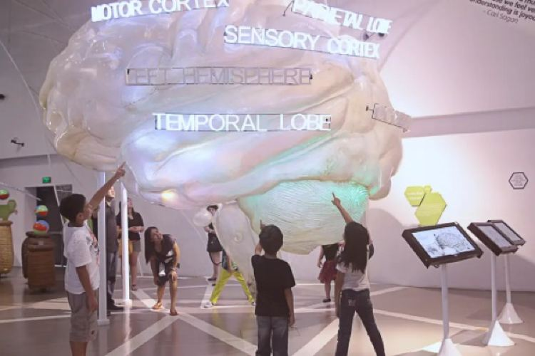 The Mind Museum1
