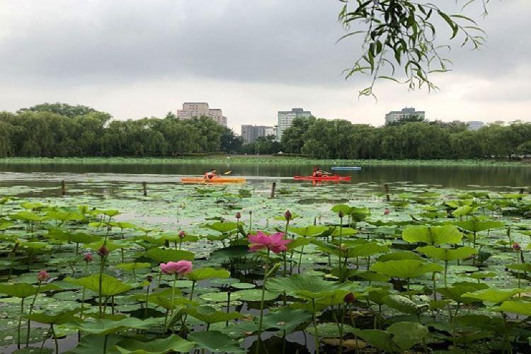 Chaoyang Park1