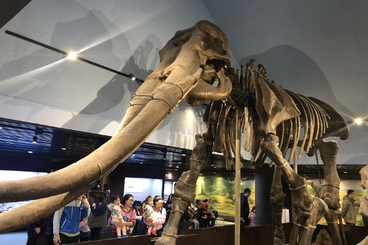 The Paleozoological Museum of China1