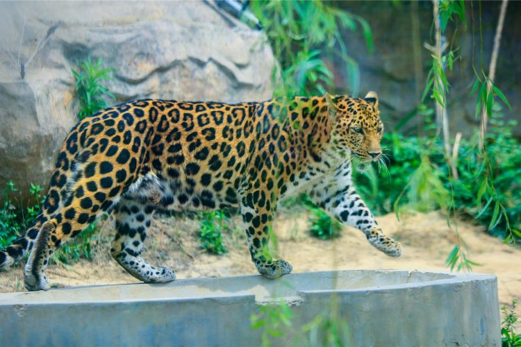 Linyi Zoo and Botanical Garden2