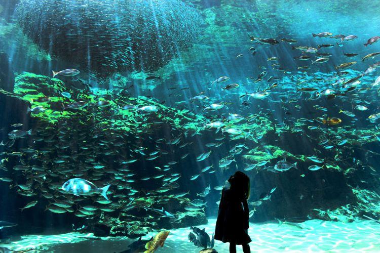 九十九島水族館3