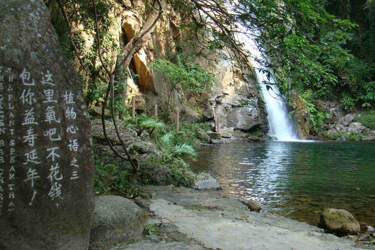 天馬山生態旅遊區4