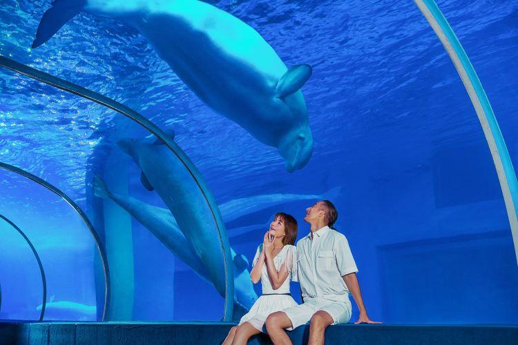 Grandview Aquarium4