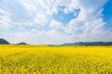 全国最早的油菜花已经上线,80万亩的金色花海就在彩云之南!