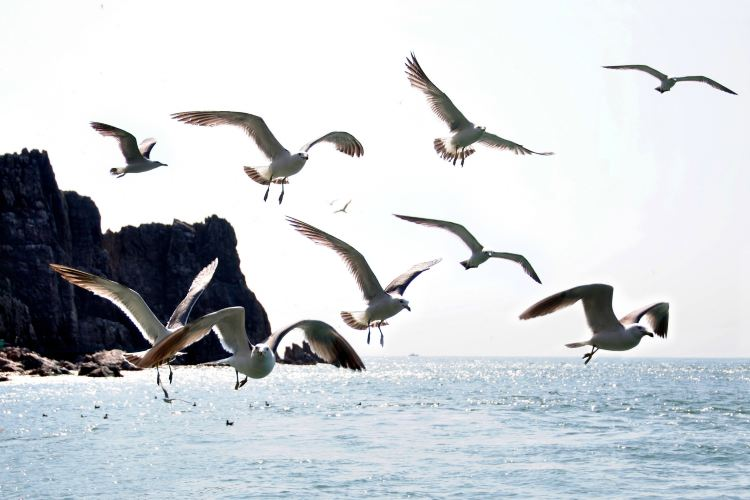 Sea Donkey Island4