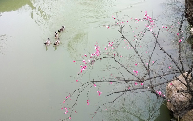 烟花三月游镇扬(焦山、北固山、瘦西湖)