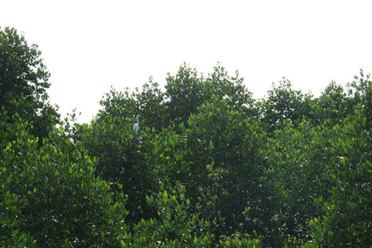 亞庇市濕地中心 1