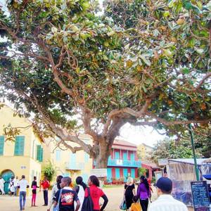 塞内加尔游记图文-塞内加尔奴隶岛之第一次登岛~4