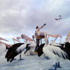 袋鼠岛游记图文-【南澳】袋鼠岛没护栏的野生动物园之旅
