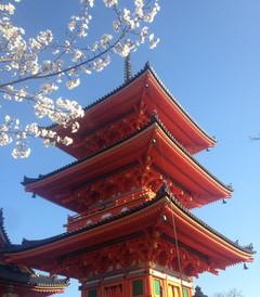 [京都游记图片] 等待最好的时光去看你-樱花季日本之旅