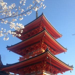 奈良游记图文-等待最好的时光去看你-樱花季日本之旅