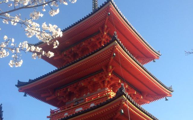 等待最好的时光去看你-樱花季日本之旅