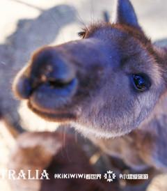 [南澳大利亚游记图片] 【澳大利亚】KiKiWiWi游南澳之初秋的邂逅