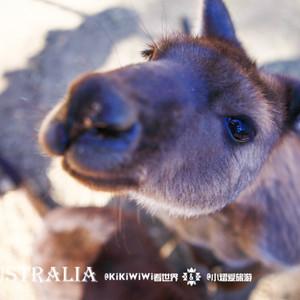 袋鼠岛游记图文-【澳大利亚】KiKiWiWi游南澳之初秋的邂逅