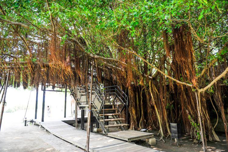 Anping Tree House4