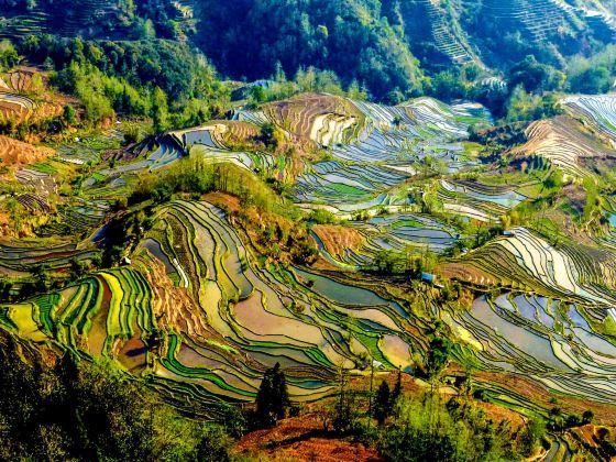 Laohuzui Terraced Field Scenic Area