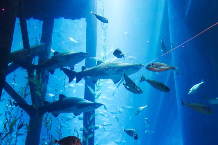 Dubai Aquarium and Underwater Zoo4