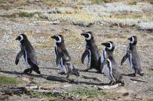 智利巴西一路游6 DAY8:  1月16日(日)早上9点的车三小时回鹏塔,这回和COCO彻底分手了,