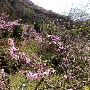 松林桃花旅游景点攻略图