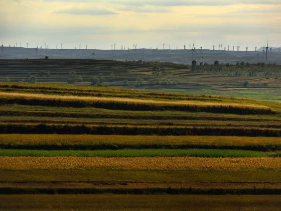 Grass Skyline Scenic Road