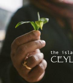 [斯里兰卡游记图片] 斯里兰卡-一片锡兰 【胶片数码终极合版】