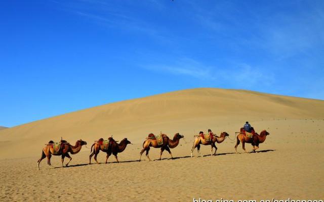 蒙甘新藏青五省环游之六——鸣沙山、莫高窟