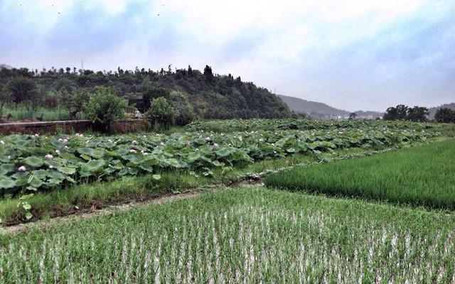 肥肥安走遍中国—《爸爸去哪儿》游新叶村