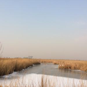 垦利区游记图文-冬季到威海去看天鹅