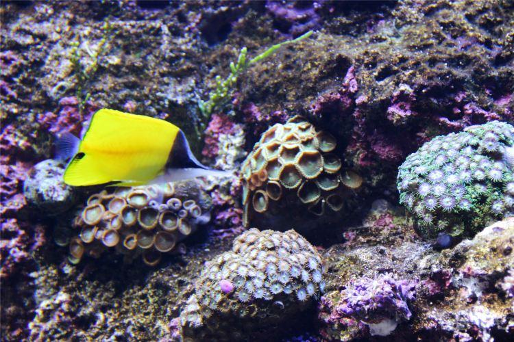S.E.A. Aquarium2