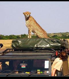 [安博塞利游记图片] 【走进东非——动物王国巡猎记】