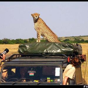 肯尼亚游记图文-【走进东非——动物王国巡猎记】