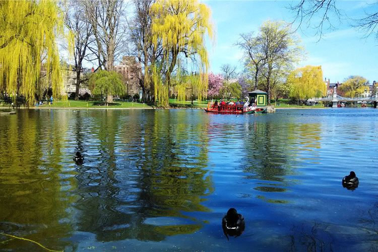 波士頓公園1