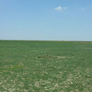 安固里草原旅游景点攻略图