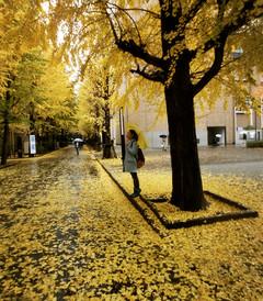 [东京游记图片] 「14年冬、日本初印象之东京早稻田、北海道温泉、京都大阪之旅」