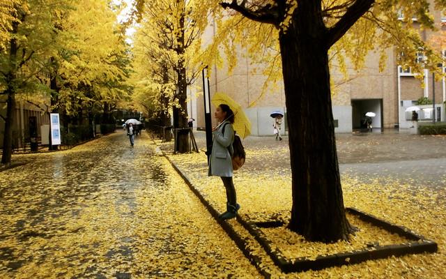 「14年冬、日本初印象之东京早稻田、北海道温泉、京都大阪之旅」